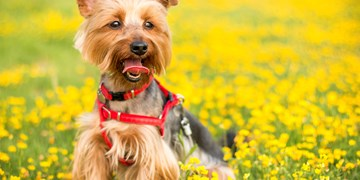 The top five dog-friendly walking routes in Lanarkshire