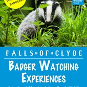 Family Badger Watch